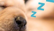 必見!寝ても疲れが取れない原因と対策法。睡眠の質を上げるには?