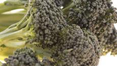 免疫力アップの健康野菜、ブロッコリーの効能とレシピ