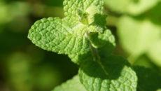 ハーブはすごい植物だった!ハーブの基礎知識と使い方